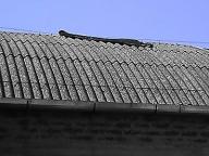 tettoia amianto